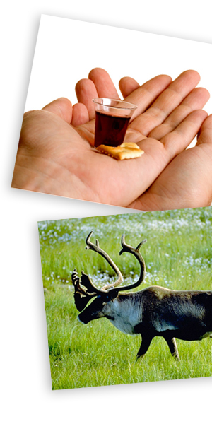 Hands holding communion elements, and a caribou