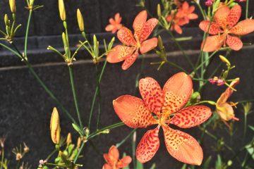 Hong Kong flowers
